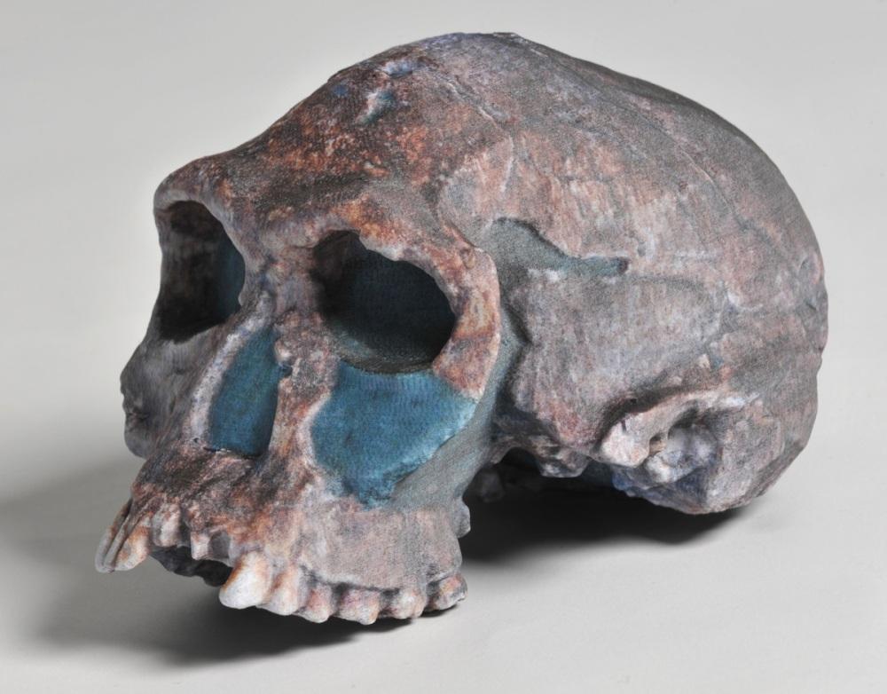 2.7.2b - SDL - mcor - fossile copia